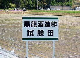 黒龍 試験田